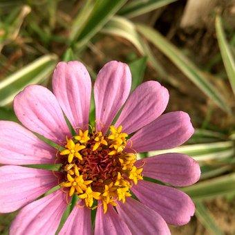 Flowers, Garden, Nature, Green, Summer, Spring