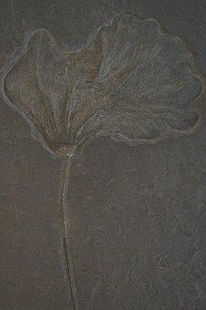 Crinoid, Fossil, Fossilized, Petrification, Stone