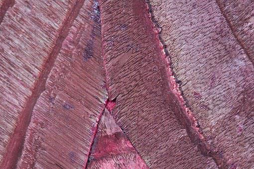 Wood, Bark, Structure, Fund, Background, Grain, Nature