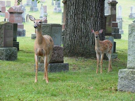 Cemetery, Deer, Fawn, Doe, Headstone, Animal