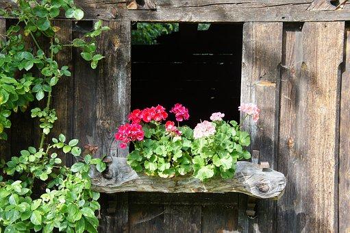 Wood, Hut, Flowers, Boards, Old, Brown, Wooden Beams