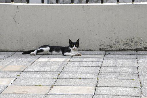 Cat, Rest, Courtyard, Animal, Taiwan, Afternoon, Lying