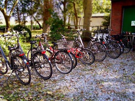 Wheel, Wheels, Bike, Bicycles, Pebble, Green, Mature