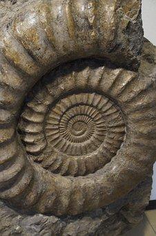 Fossil, Snail, Ammonit, Fossilized, Petrification
