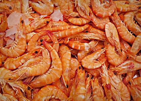 Shrimp, Prawn, Animal, Seafood, Decapod Crustaceans