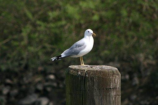 Seagull, Pile, Mood, Sea, Maritime, Bird, Coast, Animal