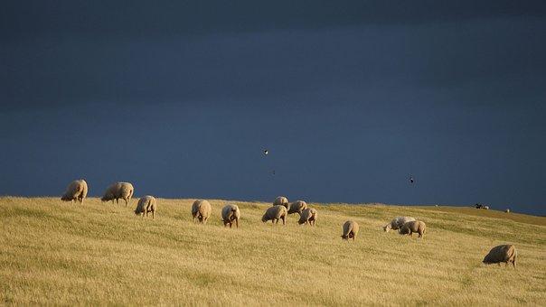 Thunderstorm, Dike Sheep, Sheep, Dike, North Sea