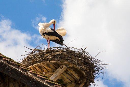 Stork, Nest, Bird, Storchennest, Nature, Animal, Breed