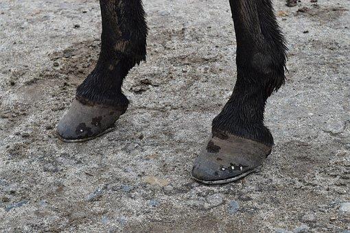 Mule, Pins, Horseshoe, Donkey, Effort, Weight