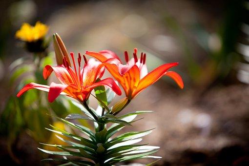 Spring Flowers, April Flowers, Garden, 5dmark2
