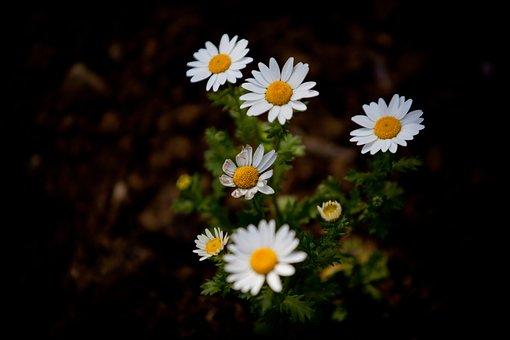 Garden, 5dmark2, 70-200mm, Flowers