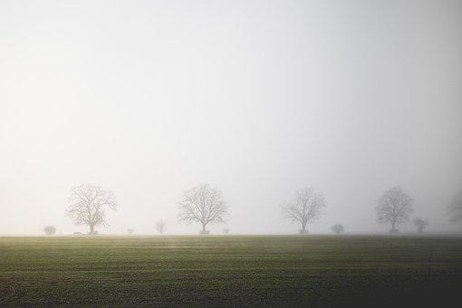 Field, Fog, Trees, Tranquility, Landscape, Balance