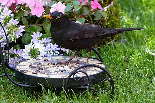 Bird, Throttle, Turdus Philomelos, Male, Summer, Garden