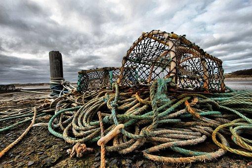 Pot, Crab Pot, Lobster Pot, Crab, Seafood, Fishing