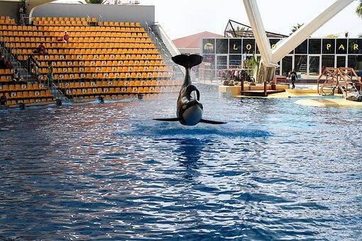 Orca, Wal, Orcashow, Loropark
