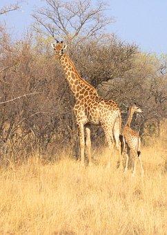South Africa, Park, Animal, Wild, Mammal, Nature
