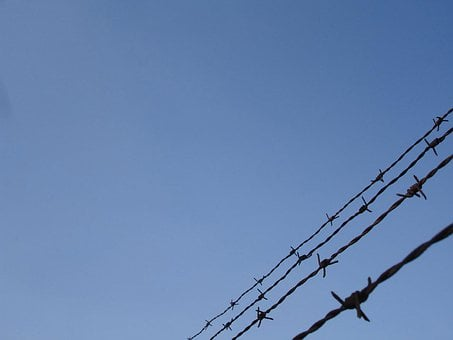 Barbed, Wire, Protecting, War, Security, Protection