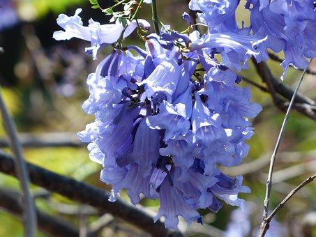 Flowers, Light Blue, Purple, Tree, Trumpets