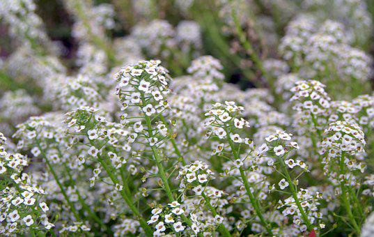 Tiny Flowers, Small Flowers, The Delicacy, White