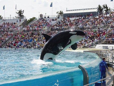 Orca, Whale, Show, Seaworld, Aquarium, Animal, Splash