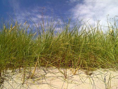 Reedbed, Dune, Beach, Gotland, Sweden, Summer, Nature