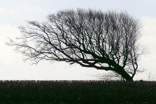 Hornbeam, Beech, Tree, Windschief, Wind Chur, Autumn