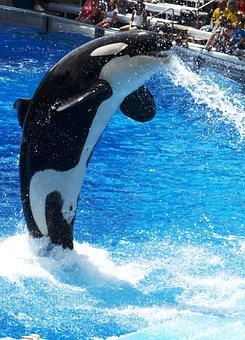 Dolphinarium, Orca, Water World, Orlando, Swimming Pool