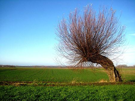 Wind Chur, Tree, Windschief, Overgrown, Crown