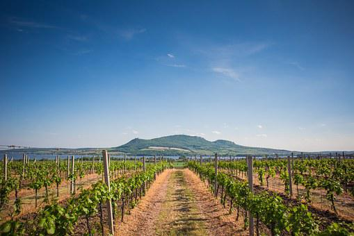 Winery, Vineyard, Agriculture, Peaceful, Summer, Sky