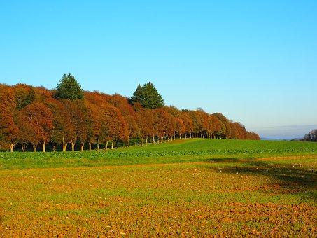 Avenue, Trees, Forest, Autumn, Autumn Mood, Field
