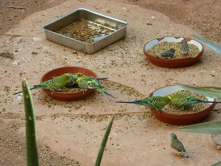 Birds, Budgerigars, Green, Zoo, Grains, Together, Food