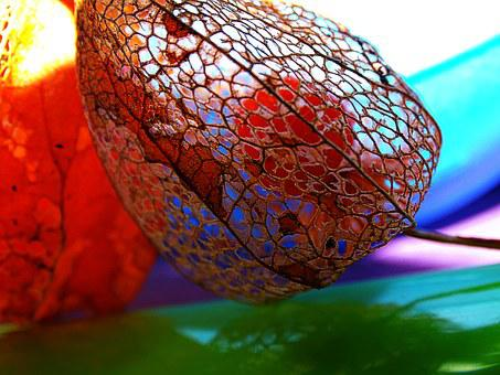 Physalis, Macro, Lace, Colors, Nature, Cage