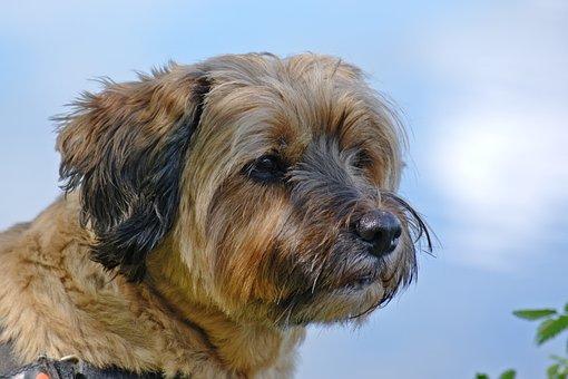 Dog, Head, Animal, Pet, Wildlife Photography, Portrait
