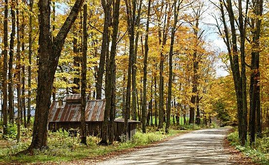 Vermont, Newark, Fall Foliage, Autumn, Northeast