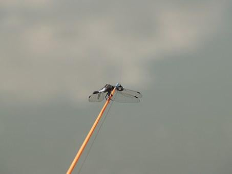 Dragonfly, Angler, Water, Fisher, Nature, Fishing Rods