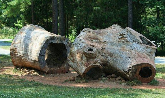 Tree Stumps, Logs, Huge, Poplar Wood, Hollow, Tree