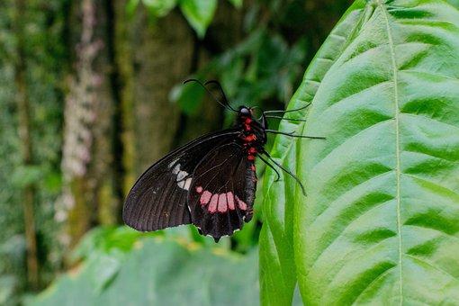 Butterfly, Insect, Garden, Flower, Butterfly Wings