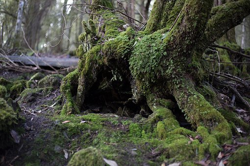 Tree, Forest, Moss, Landscape, Nature, Forest Trees
