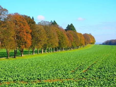 Avenue, Field, Arable, Trees, Promenade, Sankt Johann