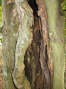 Tree, Trunk, Hollow, Decayed, Decay, Aged, Weathered