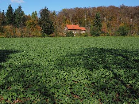Field, Agriculture, Winter Oilseed Rape, Green Manure