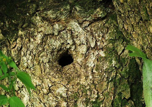 Tree Bark, Hollow, Wood, Nature, Trunk, Hole, Rough