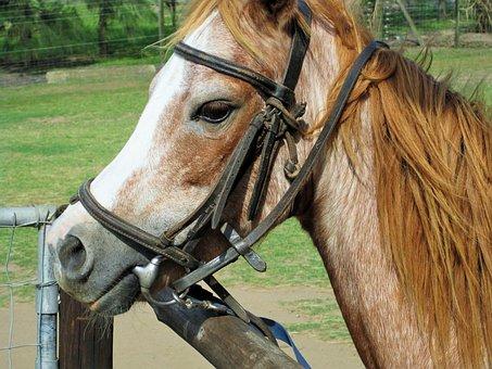 Pony, Bridle, Riding Gear, Animal, Farm, Horse