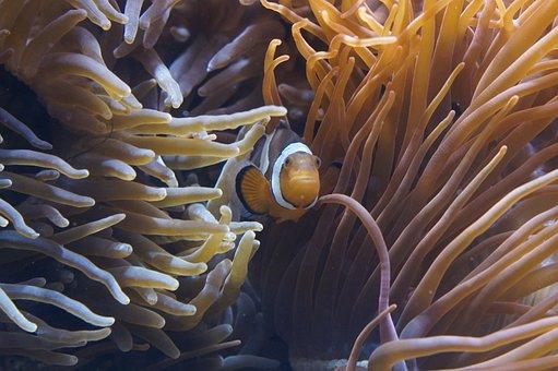 Anemones, Sea Anemones, Underwater World, Aquarium, Sea