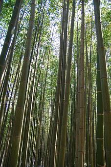Bamboo, Nature, Bamboo Forest, Vs Grove