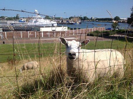 Sheep, Boulevard, Shipyard, Vlissingen, Zealand