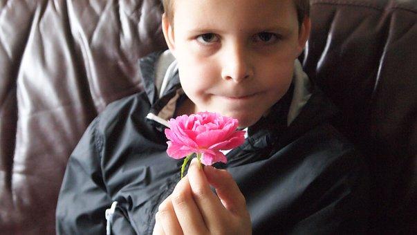 For You, Rose, Pink, Boy, Macro, Flower, Pink Rose