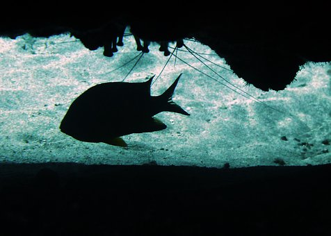 Damsel Fish, Profile, Cave, Sea Life, Scuba Diving