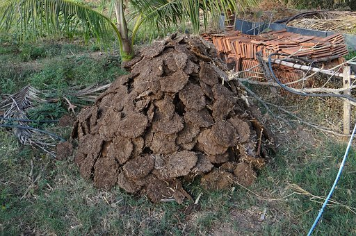 Cow Dung, Fuel, Cow Pats, Cow Manure, Dried, Drying