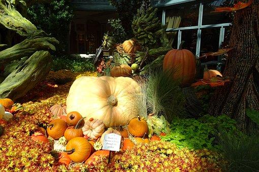 Pumpkin, Vegetables, Decoration, Las Vegas, City